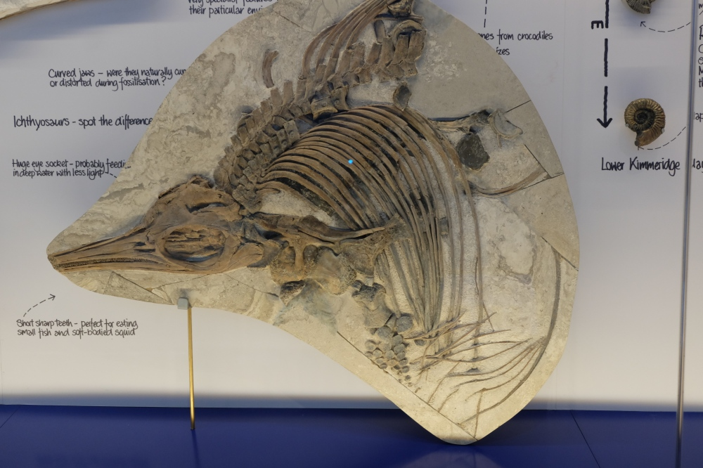 ichthyosaurus_etches_collection